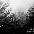 Mt Desert Fog by Lizi Beard-Ward