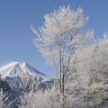Mt Fuji And Frost-covered Trees by Toyofumi Mori