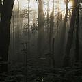 Mt. Hood National Forest Near Larch by Phil Schermeister