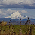 Mt Mclaughlin Springtime by Mick Anderson