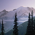 Mt Rainier As Seen At Sunrise Mt by Tim Fitzharris