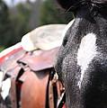Mule Days Photo by Travis Truelove