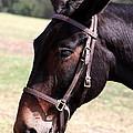 Mule by Travis Truelove