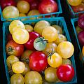 Multicolored Baby Tomatoes by Dina Calvarese