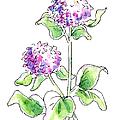 Mum Floral Drawings 1 by Gordon Punt
