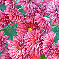 Mums The Word by Pamela Patch
