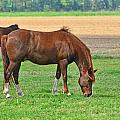 Munching Sweet Spring Grass I by Debbie Portwood