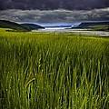 Munlochy Bay by Joe Macrae