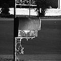 Murfreesboro Mailbox by Debbie Johansson