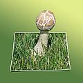 Mushroom 02 by Thomas Woolworth