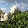 Mushroom Boy by Larry Mulvehill