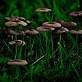 Mushroom Forest by Kris Napier