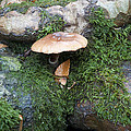 Mushroom In Moss by Bill Cannon