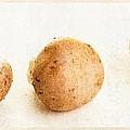 Mushroom Trio by Edward Fielding