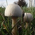 Mushrooms by Bonfire Photography
