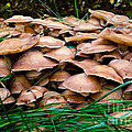 Mushrooms Galore by Terry Elniski