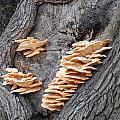 Mushrooms On A Tree by Katrina Johns