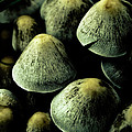 Mushrooms by Grebo Gray