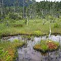 Muskeg Bog With Ponds, Mitkof Island by Konrad Wothe