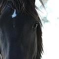 Mustang Destiny by Elizabeth Hart