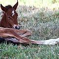 Mustang Filly by Elizabeth Hart