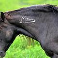 Mustang by Lisa Jaworski