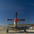 Mustang by Tim Mulina