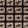 Muybridge Locomotion Horse Leaping by Photo Researchers