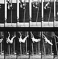 Muybridge: Photography by Granger