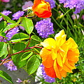 My Beautiful Roses by Phyllis Kaltenbach