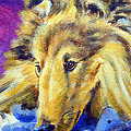 My Blue Teddy - Shetland Sheepdog by Lyn Cook