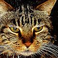 My Bored Cat by Mariola Bitner