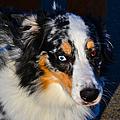 My Brown Eyes Blue 2 by Bill Owen