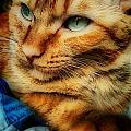 My Favorite Feline by Sarah Wiggins