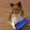 My Frisbee by Scott Hervieux