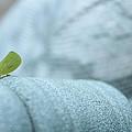 My Little Green Friend by Nina Mirhabibi