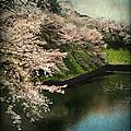 My Spring by Eena Bo