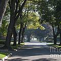My Street by Gary Chapple