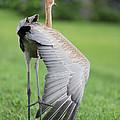My Wing Is As Long As My Leg by Carol Groenen