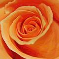 My Wonderful Rose by Steve K