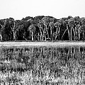 Myakka River Wilderness by David Lee Thompson