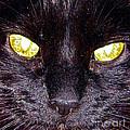 Mystic Eyes by Tonia Antilla