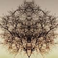 Mystic by Jay Hooker
