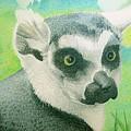 Mystic Seer Of Madagascar by Lisa Urankar