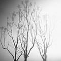 Mystic Trees 1 by Joe Lategan