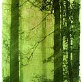 Mystical Glade by Judi Bagwell