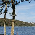 Myuna Bay Foreshore by Fran Woods