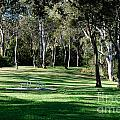 Myuna Bay Picnic Area by Fran Woods