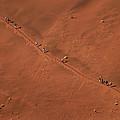 Namibia Dune Hoppers by Nina Papiorek