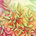 Nandina Leaves by Carla Parris